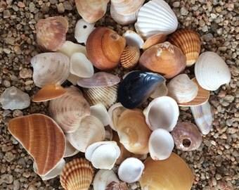 Bulk Sea Shells, Natural Sea Shells, Small Sea Shells, Genuine Sea Shells