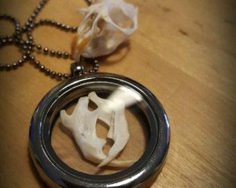 Rodent Jaw Bone locket pendant