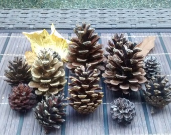 Natural Pine Cone Decorations - All Season - Unpainted pine cones, perfect for decoration and crafts! (Set of 12)