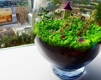 Tiny Snails, Three Miniature Snails for a Fairy Garden, Doll house, Terrarium or Pot plant
