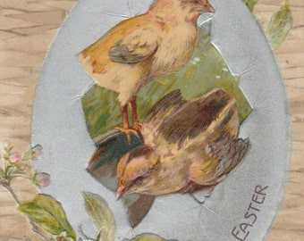 antique embossed  undivided posted 1907 chicks in broken egg