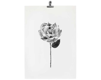 STUDIO SALE // OLD A5 Rose Print