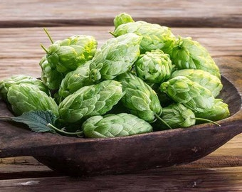 HOPS Seeds-Grow your OWN hops for Home Brew, 50 seed pack FREE shipping