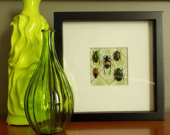 Mixed Insect Display Frame // Real Bugs // Beetle Wall Art // Unqiue Gifts // Entomology