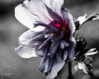 dark flower, flower,Nature Photography
