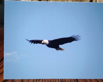 Blank Note Card - Eagle