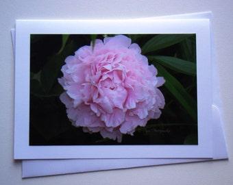 Set of 5 - Soft Pink Peony Photo Card