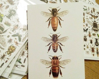 Honey Bees (Queen, Worker, Male) Greetings card