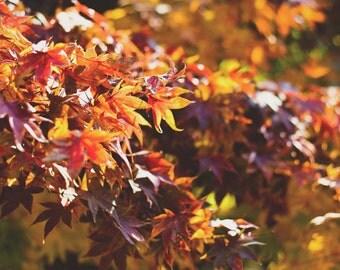 Autumn Colors - Autumn Colors Photo - Foliage - Fall - Nature Photography - Digital Photo - Digital Download - Instant Download - Home Decor