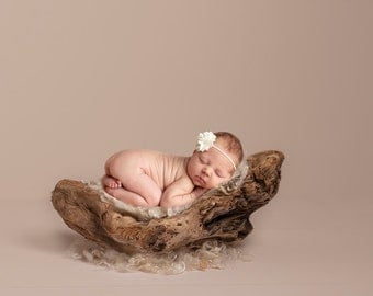 Digital Backdrops/Props (Beach Driftwood Newborn Prop on Cream Backdrop)