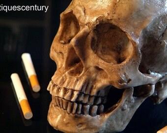 Skull human replica. Craneo humano. Calavera a tamaño real...AntiquesCentury.