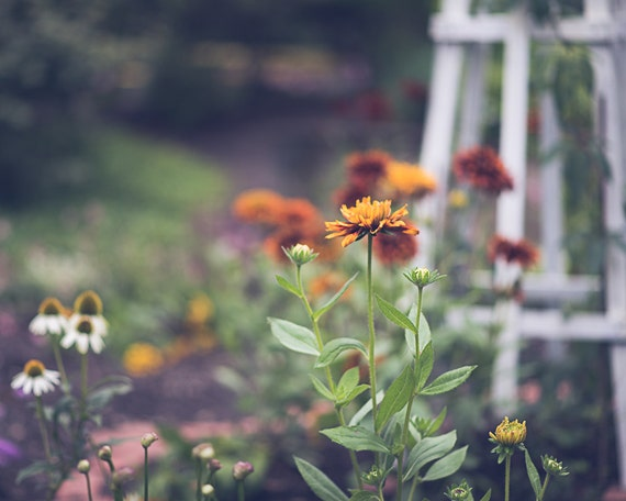 Flower Garden Photograph - Fine Art Print - Home Wall Decor - Flowers - Floral Pictures - Living Room - House Warming Gifts - Girls Room