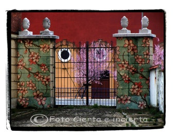 Spring (Fine art photography, graffiti, street art, flowers, tree, architecture, rosa, bull ring, Maroon, yellow)