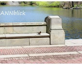 Little bird, photo painting, 45 X 30 cm