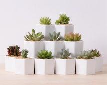 Set of 4 White Porcelain Hexagonal Flower Pots, White Geometric Plant Pots, Cactus Plant Pot, White Planters