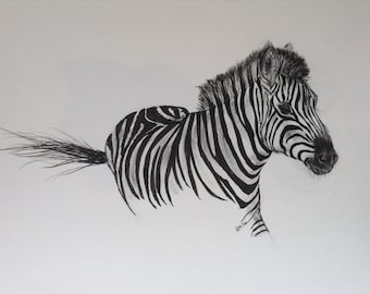 Large picture of zebra in pen and and charcoal. Original drawing.