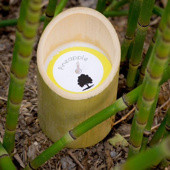 Bamboo Soy Candle + Seashell Soy Candle