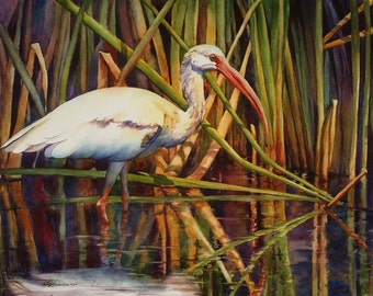 white ibis, wading bird, marsh bird, watercolor print, watercolor art