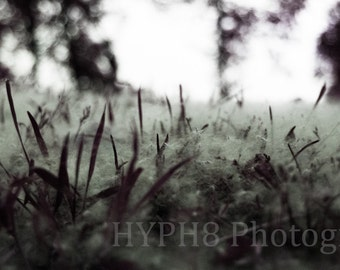 Purple Graze - Photography Print, Nature Photography, Abstract.