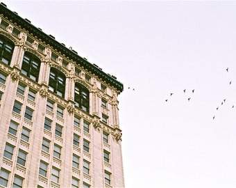 Birds - 35mm Photography Print