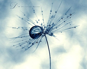 Little universe 2 ( Macro photography of a dandelion seeds with a water droplet  )