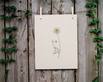 Hand-Pressed Queen Anne's Lace