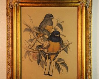 Antique ornate gold frame with bird print
