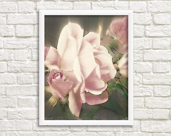 Dusty Pink Roses Photographic Art