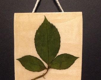 Pressed Leaves on Wood 1