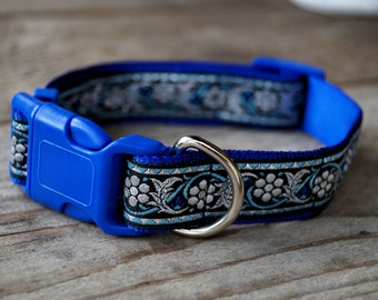 Nice blue collar for dog