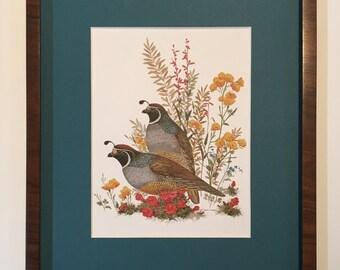 Vintage framed mounted print MORT SOLBERG 1980, California Quail, nature scene, wildflowers, Haddad's fine arts, animals and wildlife