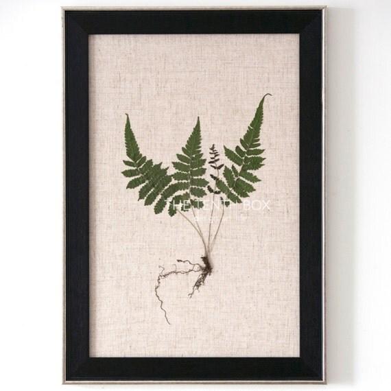 Framed pressed flowers botanical art dried plants herbarium