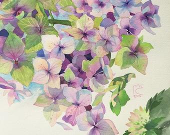 ORIGINAL. Watercolor. Hydrangea. Flowers.
