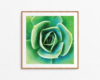 Succulent Square Art Print - Succulent Print, Plant Art Print, Succulent Printable, Cacti Plant Decor, Green Art Print, 10x10, 16x16