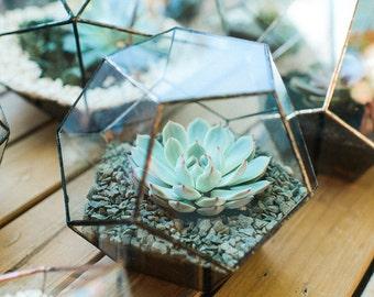 Large Glass Geometric Terrarium Handmade Geometric Terrarium Glass Dodecahedron Glass Planter Home