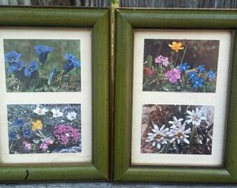 Vintage framed floral photography