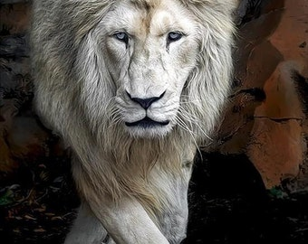 White Lion on the prowl