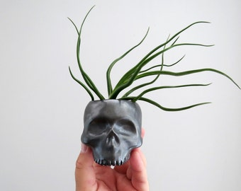 Skull Planter - perfect for cactus succulent or air plant - Gunmetal Black Gold