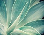 "Cactus Print, Agave Cactus Photograph, Botanical Print, Blue Green Botanical Art, Tropical Decor, Desert Print ""Desert Flower"""