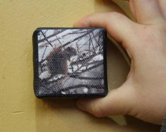 Friendly Squirrel - Mini Canvas Print