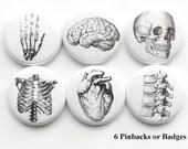 Anatomy badges PINS PINBACKS buttons human brain skull anatomical heart science geek stocking stuffer party favors magnet teacher gift goth