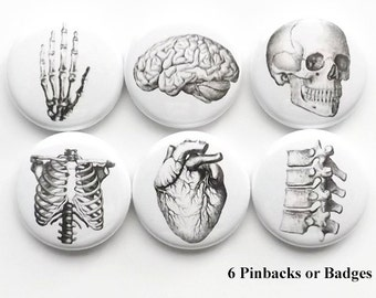 Anatomy badges PINS PINBACKS buttons human brain skull anatomical heart science geek stocking stuffer party favors magnet teacher gift goth