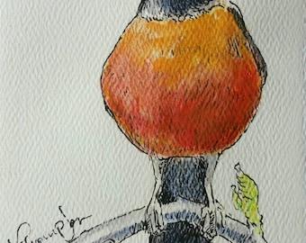 Round Robin original bird art