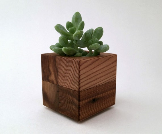 Wood cacti planter pot small cubist planter office planter for Wooden cactus planter