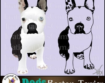 Boston Terrier set 1- with 2 PNG files and 1 EPS & SVG Vinyl Ready Image Graphics {Instant Download}