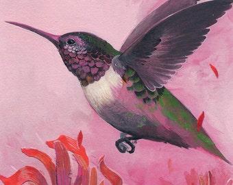 "Ruby-Throated Hummingbird - bird art print, 6"" x 6""."