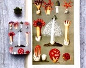 Mushroom tin, pill box