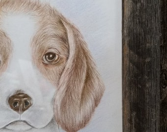 Cute puppy, original-framed colored pencil drawing