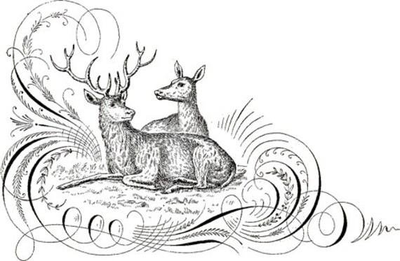 4 x 6 inch 2 deer clip art png clipart digital stamp digi stamp calligraphy Digital graphics Image Download printable art illustration