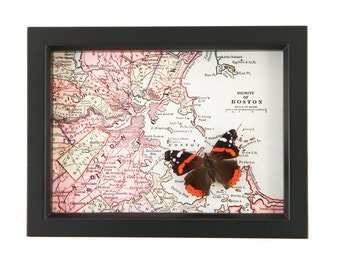 Framed Map of Boston with real native butterfly